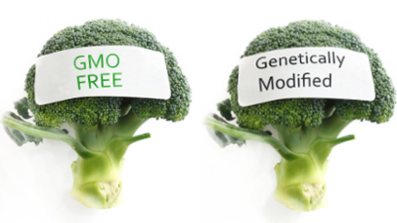 GMO vs non-GMO broccoli